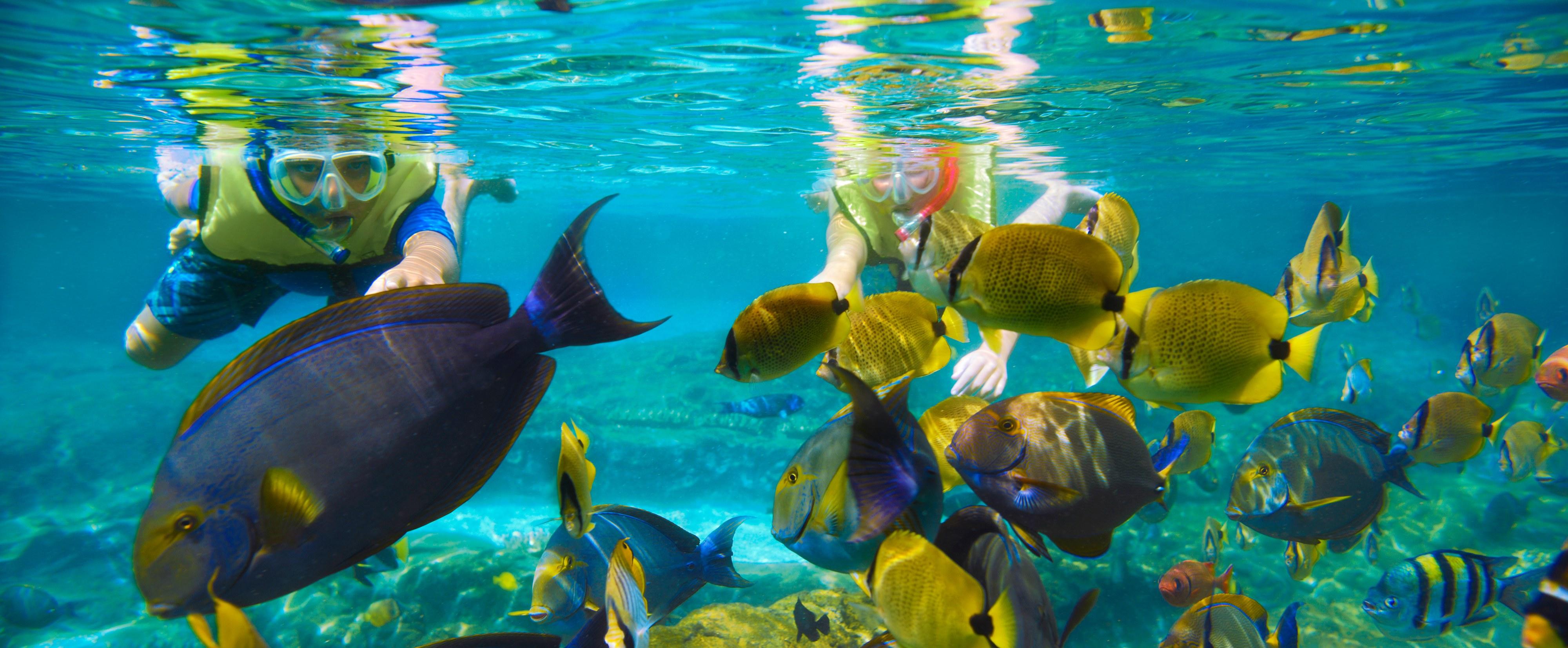 Snorkeling (Source:disney.com)